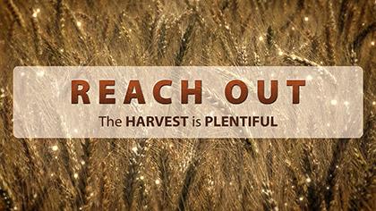 Reach Out Wheat