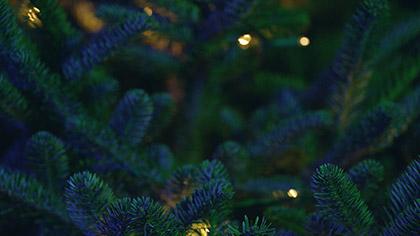 Christmas Pines Blue Green