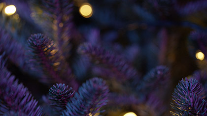 Christmas Pines Purple Teal Close