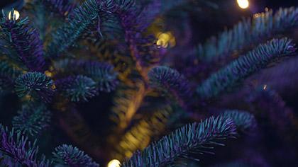 Christmas Pines Purple Teal