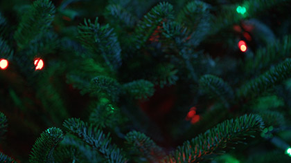 Christmas Pines Red Green Lights