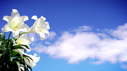 Easter Lily Sky