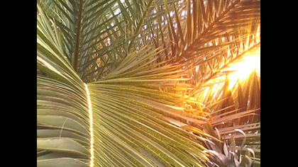 Palms Wind 2