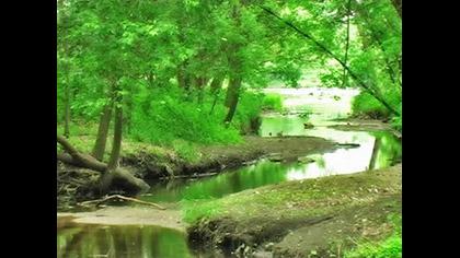 Nature Longplay