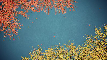 Digital Autumn Blue Skies