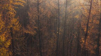 Epic Autumn Aerial Fog Sunset