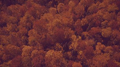 Epic Autumn Aerial Overhead Slow