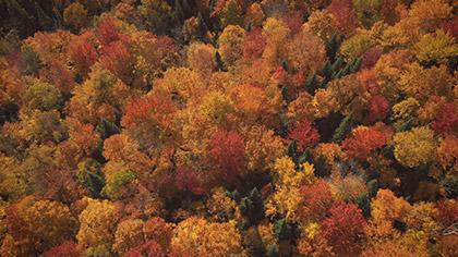 Epic Autumn Aerial Overhead View