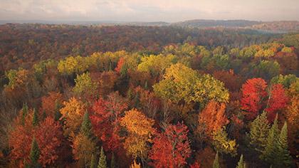 Epic Autumn Aerial Reverse Flight