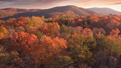 Epic Autumn Aerial Vivid Trees