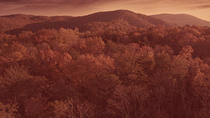 Epic Autumn Aerial Vivid Warm