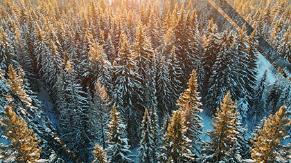 Epic Winter Aerial Closeup Trees