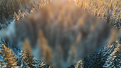 Epic Winter Aerial Trees Blur