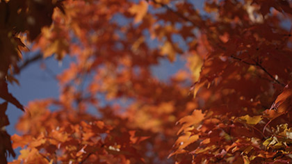 Fall Focus Golden Orange