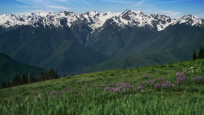 Mountain Pines Flower Field