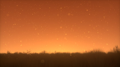 Summer Fireflies Golden Field