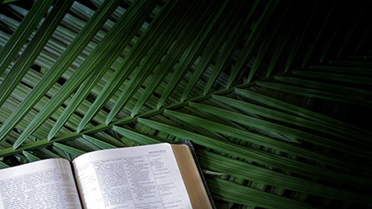 Bible Palm Branches