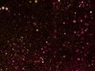 Snowglobe Gold Pink Dust