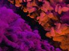 Vapor Pink Orange