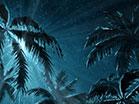 Holy Night Star Palms