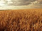 Fall Harvest Longplay