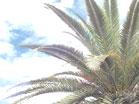 Palms Longplay