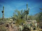 Desert Cactus Blue Sky