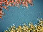 Digital Autumn Blue Skies