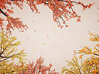 Digital Autumn Bright Sky