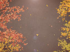 Digital Autumn Forest Walk