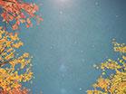 Digital Autumn Passing Trees