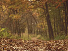 Fall Colors Forest Path