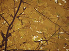Fall Colors Golden Leaves