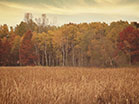 Fall Colors Tall Grass
