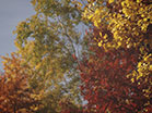 Fall Colors Various Trees