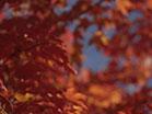 Fall Focus Red Orange