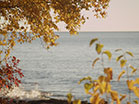 Lake Shore Golden Tree