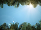 Sky View Palm Branches Blue
