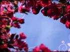 Spring Bloom Scenes