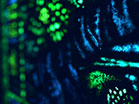 Stained Glass Blue Green