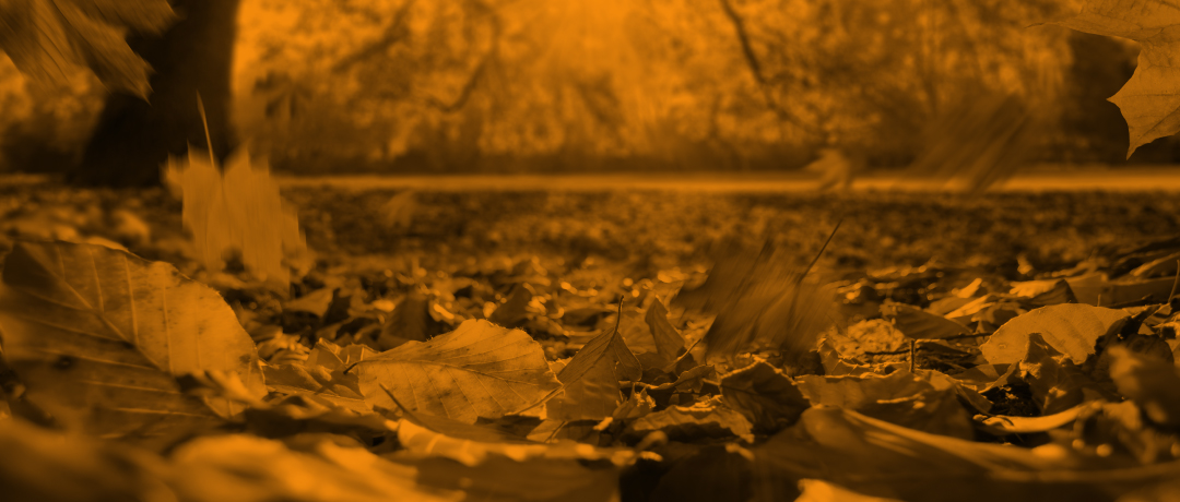 4-great-fall-activities-for-youth-group
